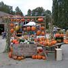 Pumpkin Patch-24