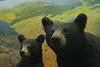 IMG_4955 Bear diorama at Museum of Science