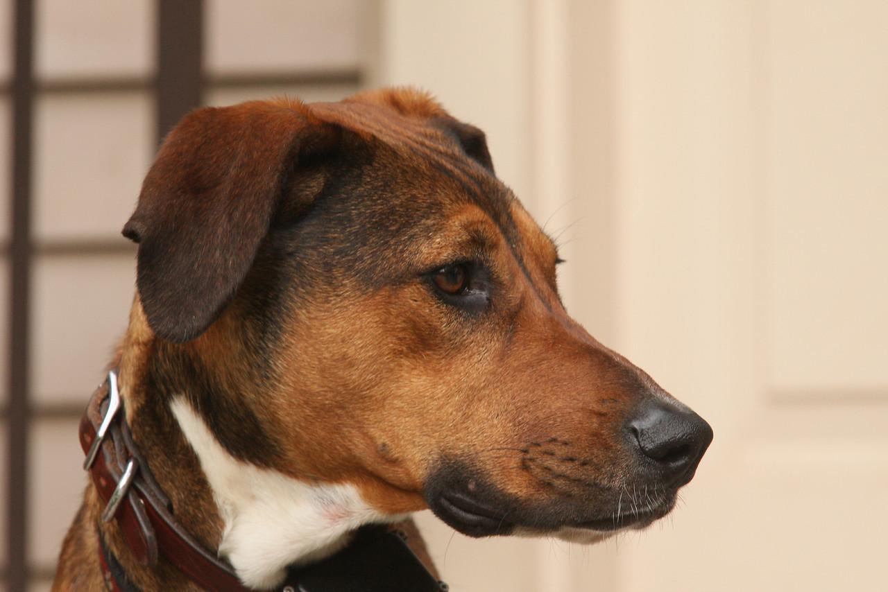IMG4_18411 Tucker dog