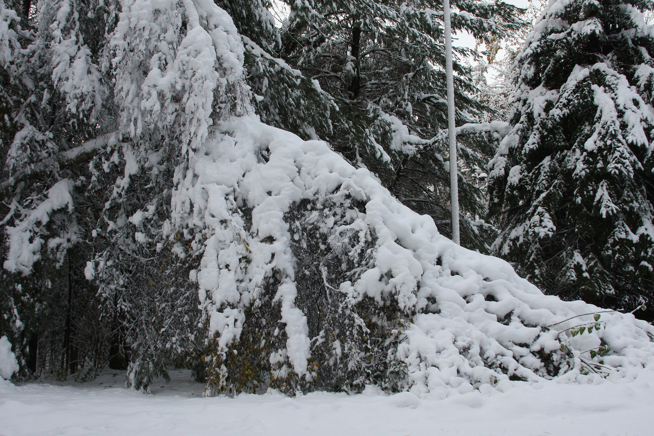 IMG4_22492 Oct storm trees