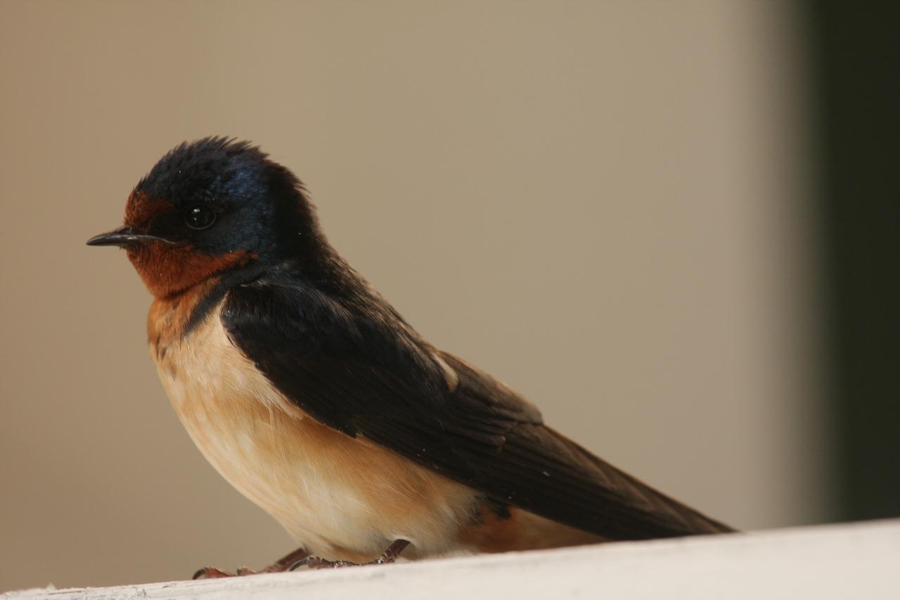 IMG4_19490 starling bird