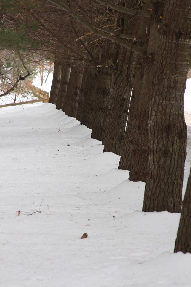 IMG4_17091 18 trees winter