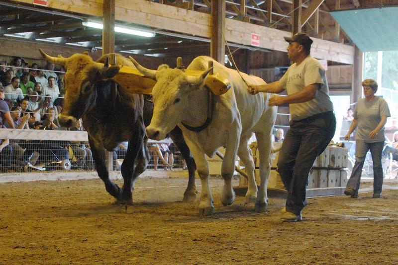 IMG4_31669 Hopkinton Fair Oxen Pulling DPPtrm