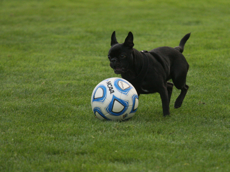 IMG4_33415 Little black dog and soccer ball trmzb