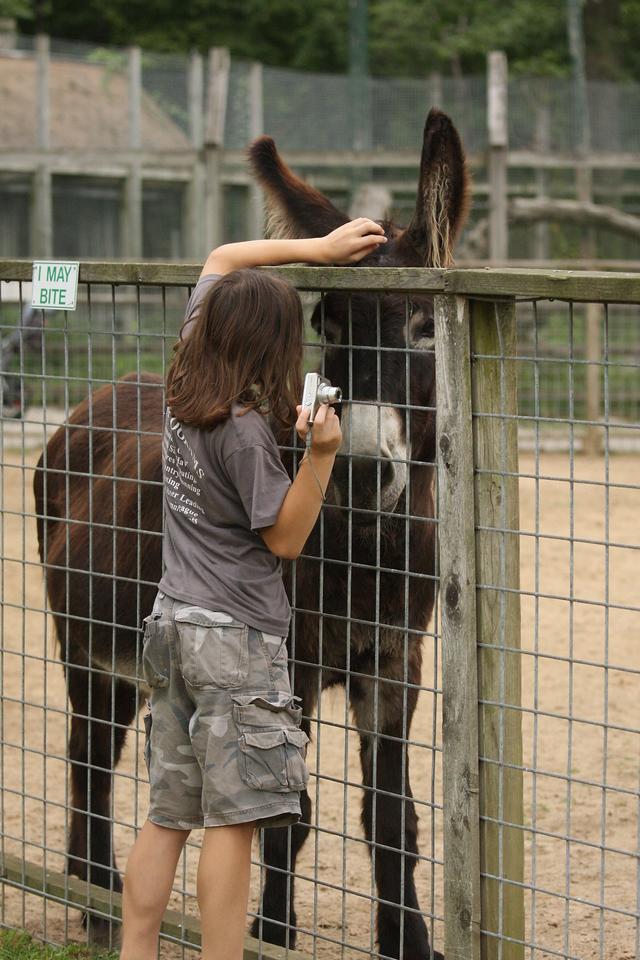 IMG4_30960 Brian, donkey