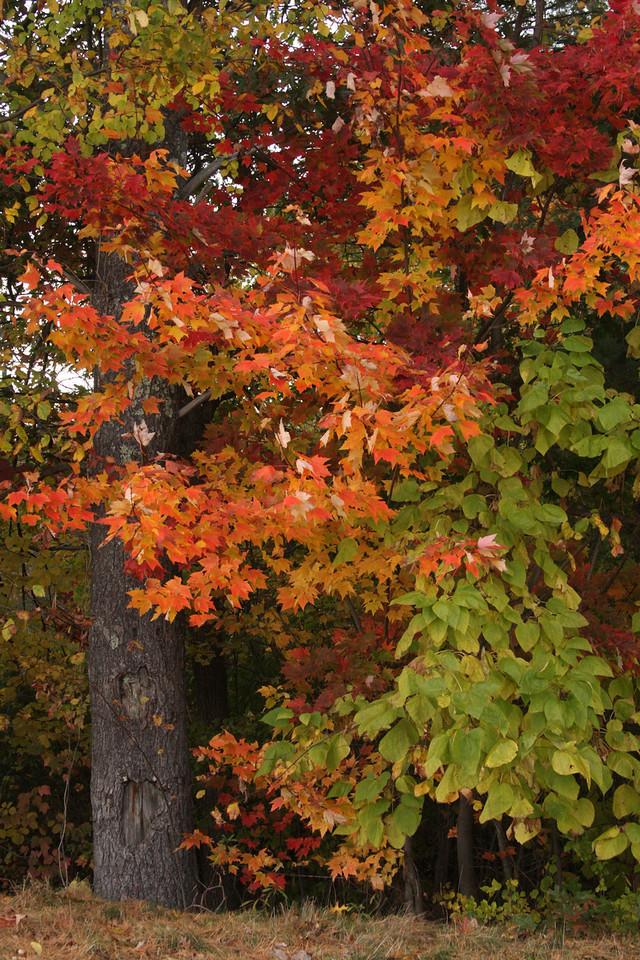 IMG4_34946 trees Mine Falls