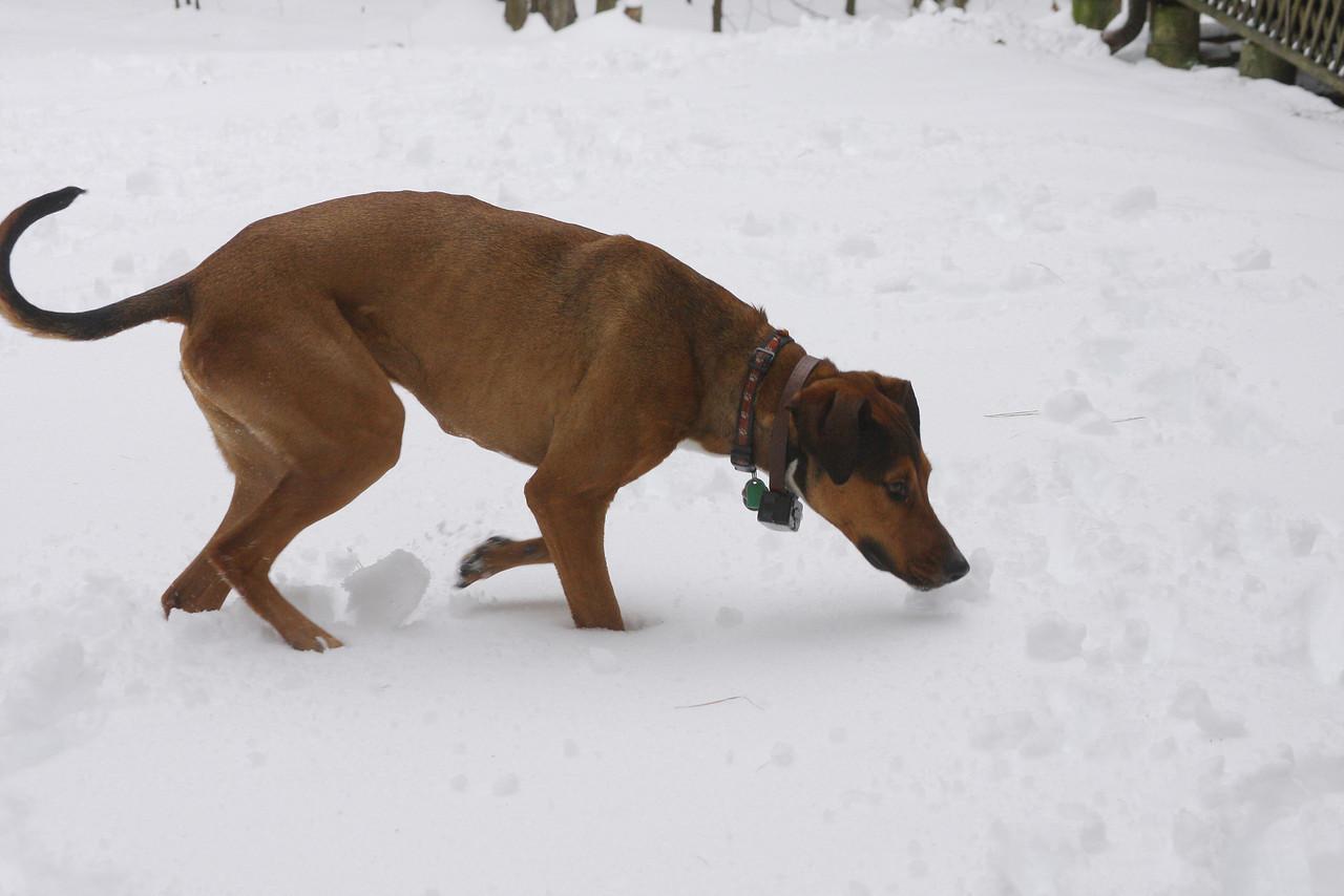 IMG4_35856 Tucker in snow DPP