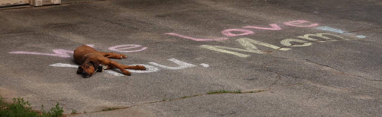 IMG4_26732 Tucker sleeping on driveway chalk