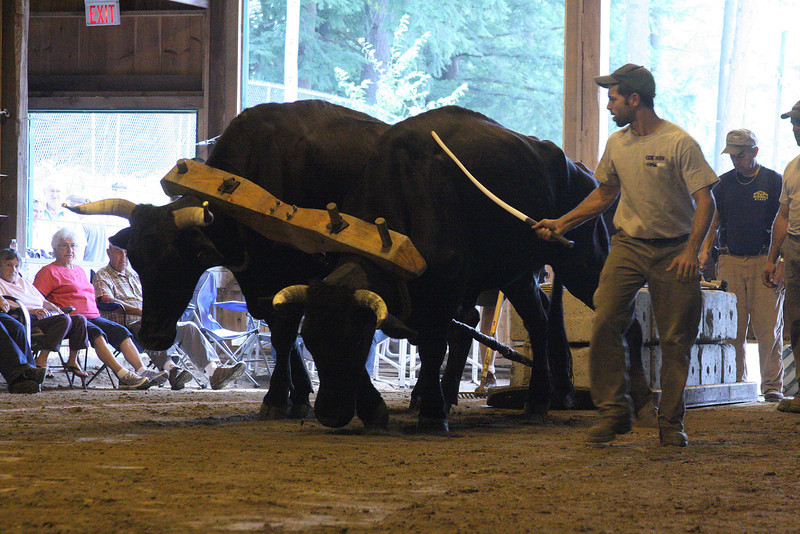 IMG4_31672 Hopkinton Fair Oxen Pull zb