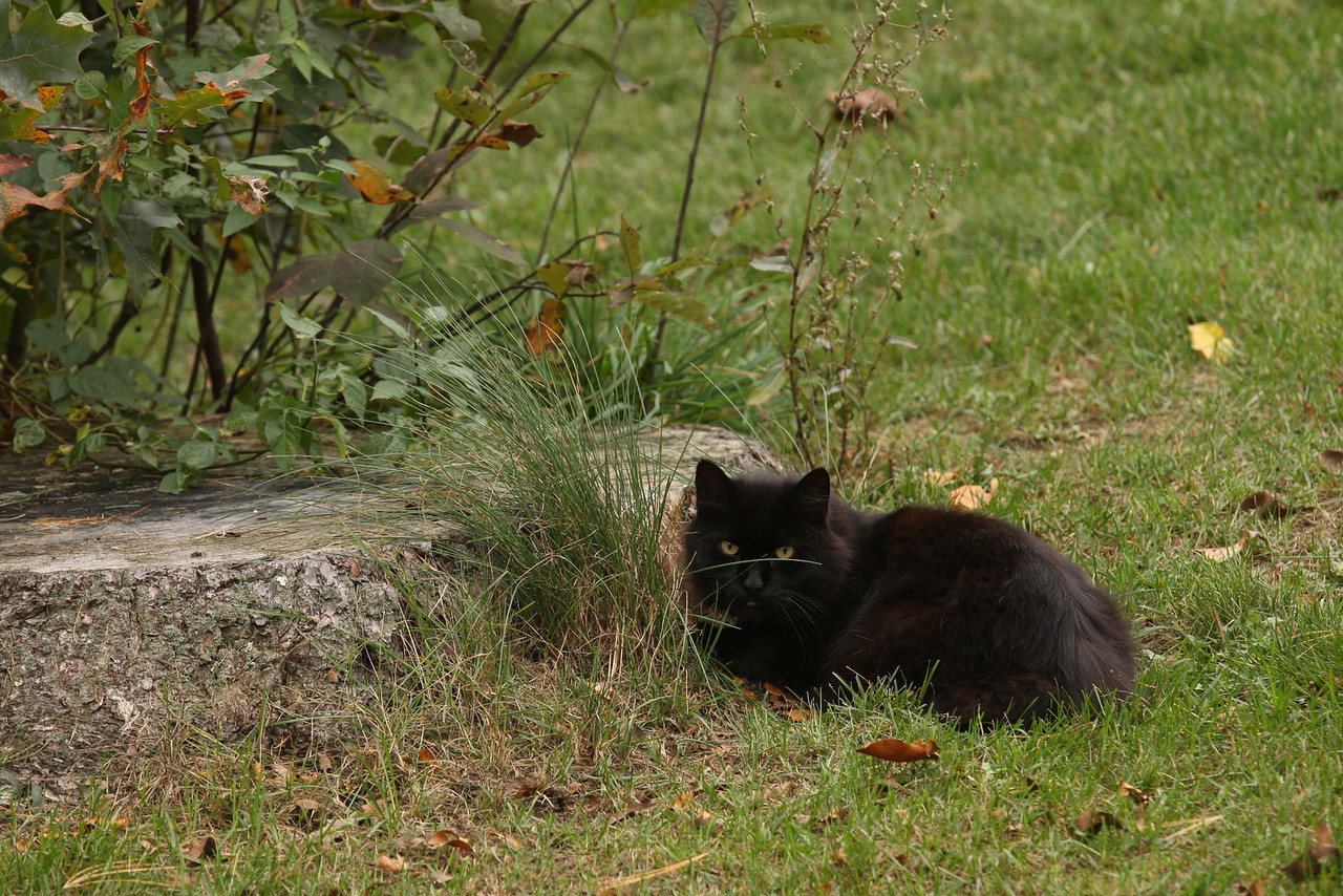 IMG4_34408 black cat