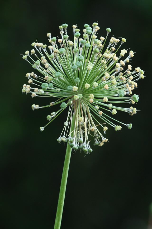 IMG4_27871 flower