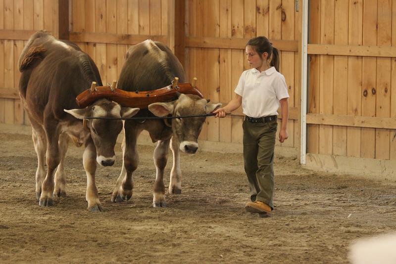 IMG4_31642 Hopkinton Fair working steer Abby