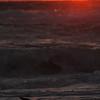 IMG4_26114 Bird at Holmes beach sunset DPP