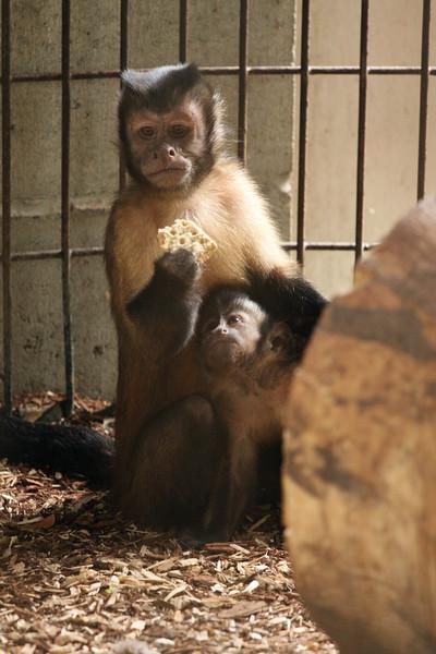 IMG4_30937 Monkeys zb