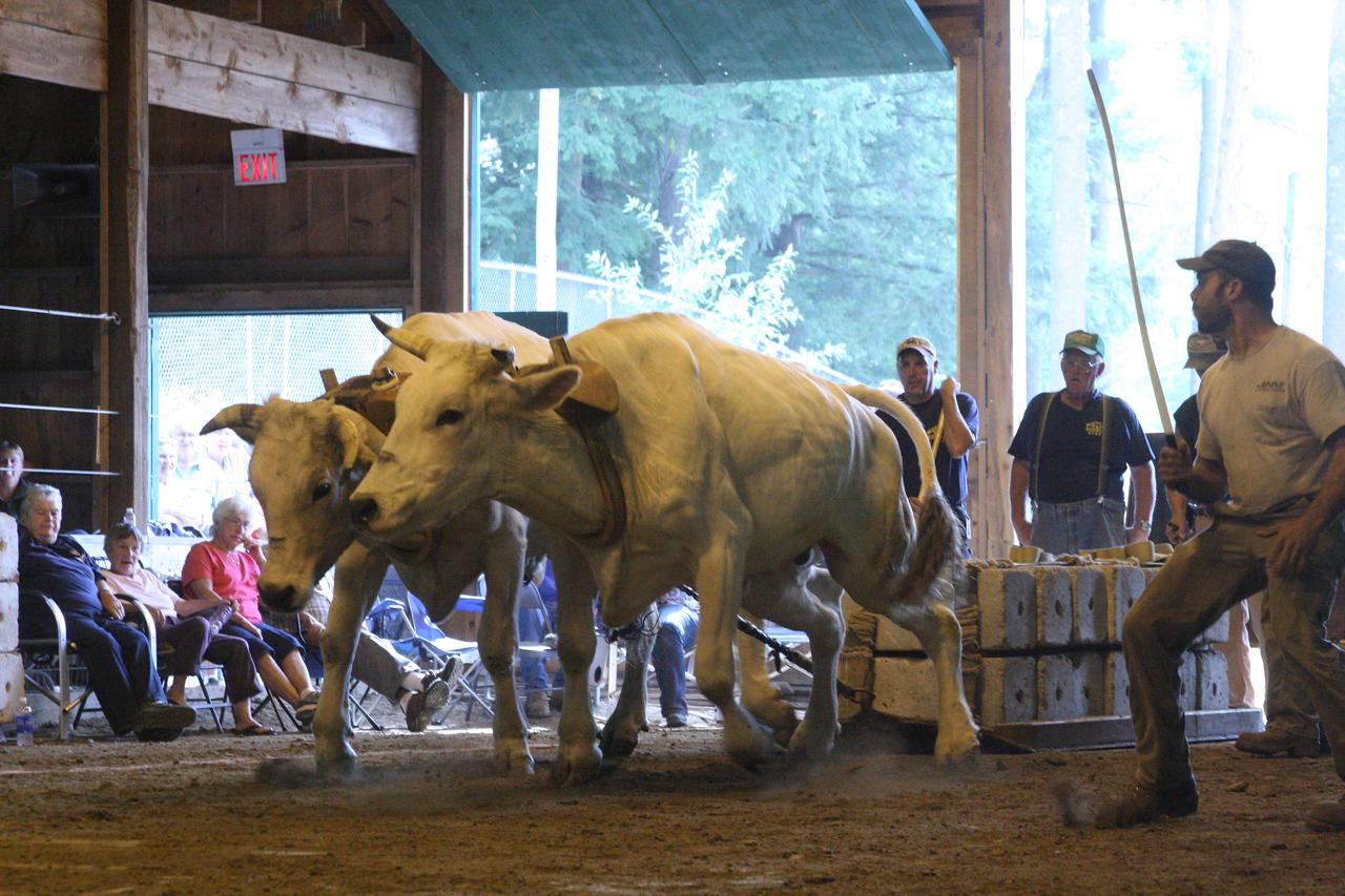 IMG4_31681 Hopkinton Fair Oxen Pull