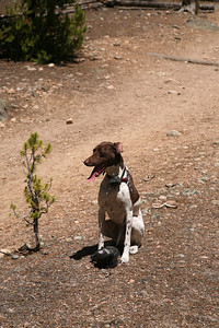 Ferocious guard dog, ha ha, Molly on the look out for bears and mountain lions.