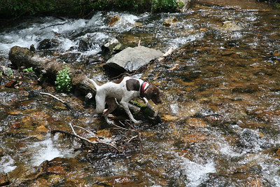 Molly playing in the creek.  Oblivious to the very cold water!