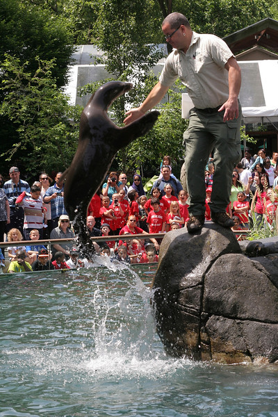 IMG_9862 Sea Lion leap NYC Central Park Zoo trmzb