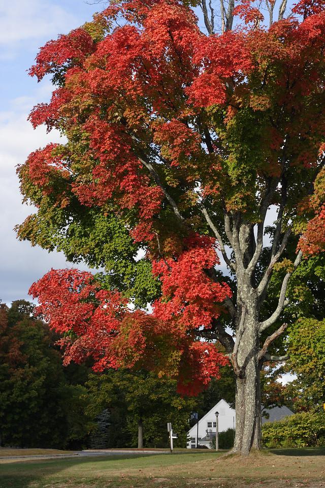 IMG_10387 Tree dpp