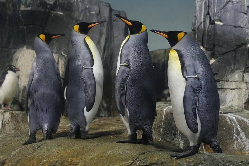 IMG_9878 Penguins DPP