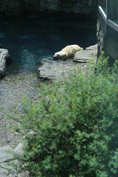 IMG_9842 Polar Bear
