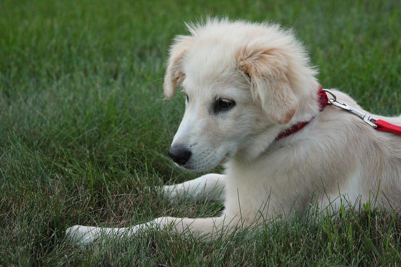 IMG4_38952 Zoee puppy dog dpp