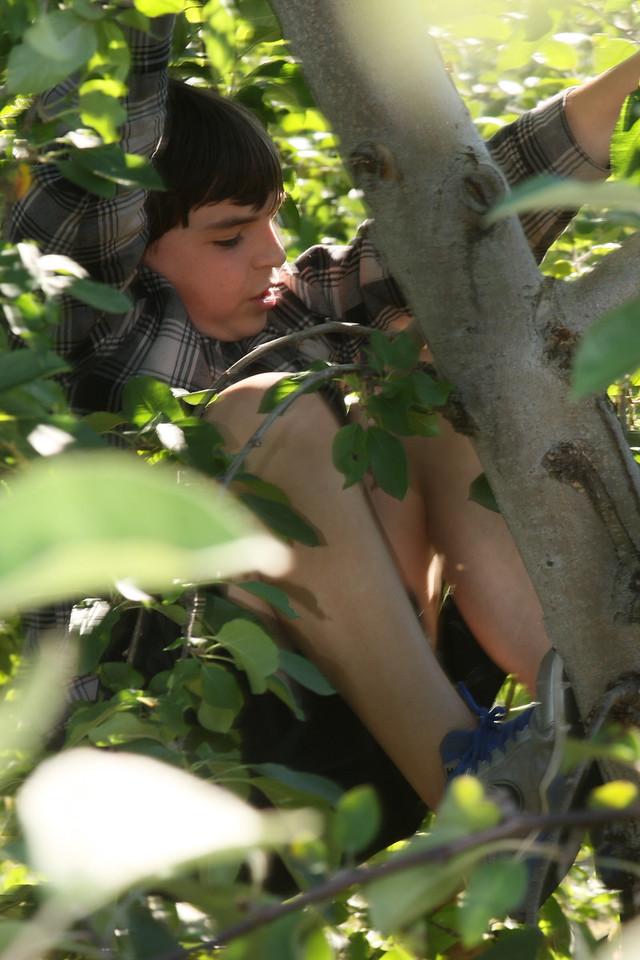 IMG4_40664 Brian in apple tree