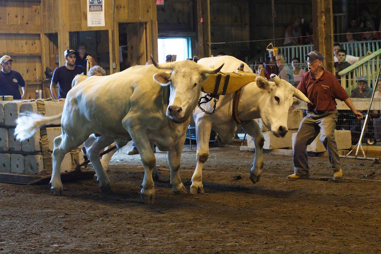 IMG_10324 Oxen pull Hopkinton Fair dpp
