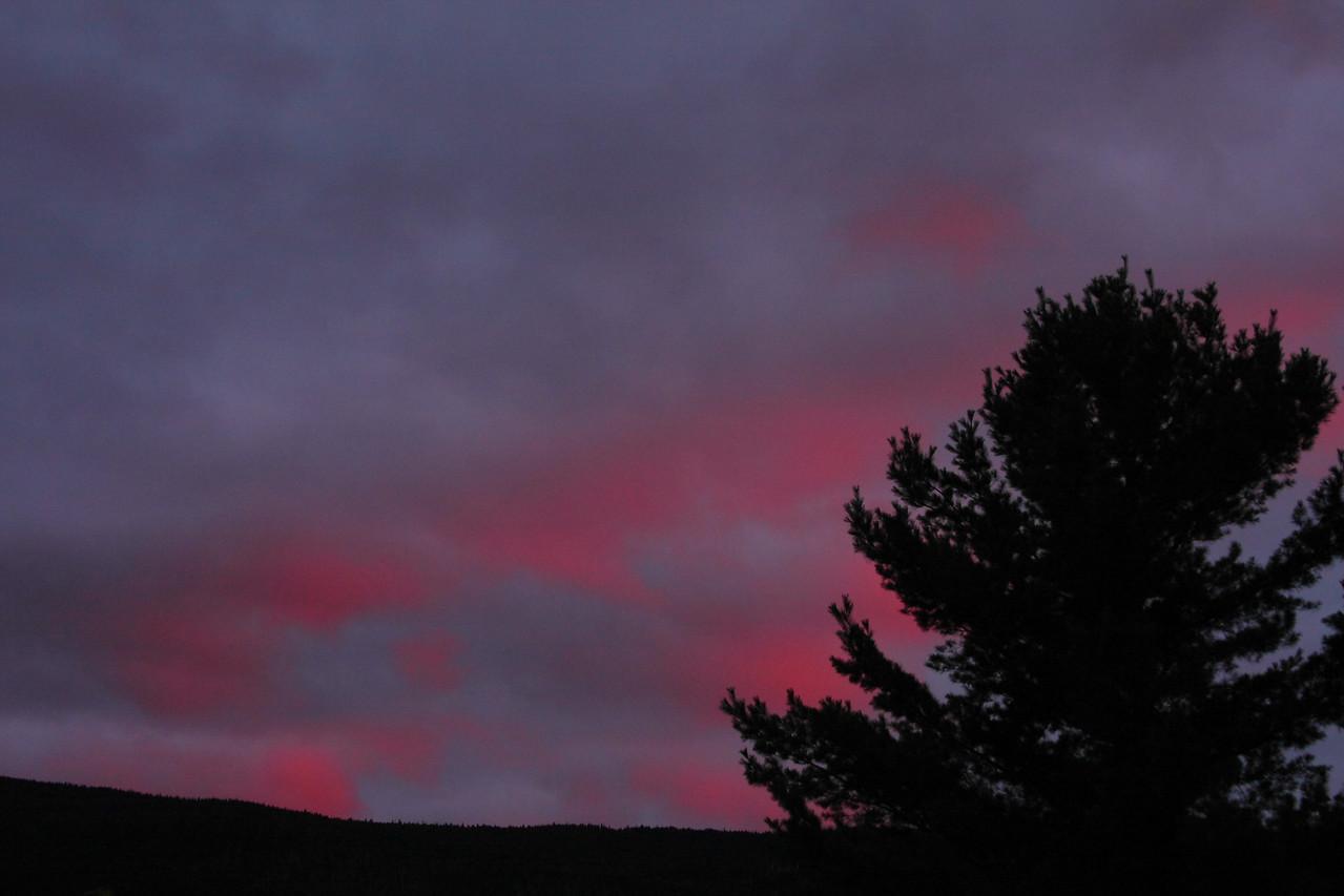 IMG4_38630 Sunset clouds, pine tree DPP
