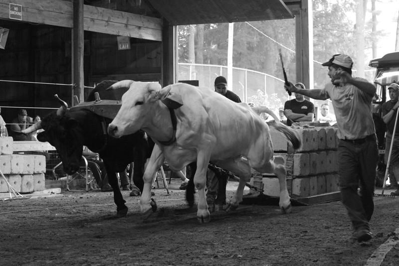 IMG_10308 Oxen Pull Hopkinton Fair dpptrmbw