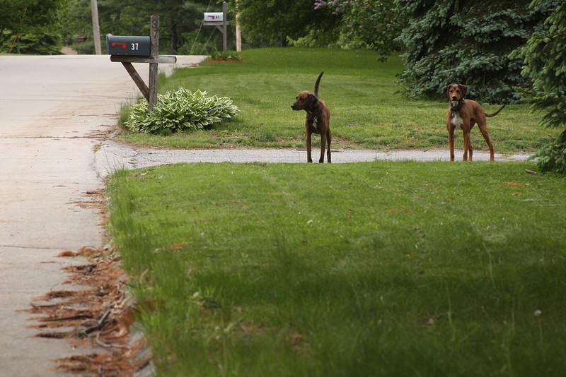 IMG4_37833 Aaron, Tucker dogs waiting