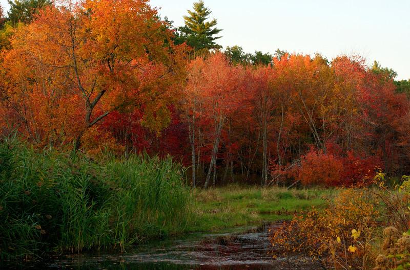 IMG_10397_8 Fall Foliage Dunstable_tonemapped