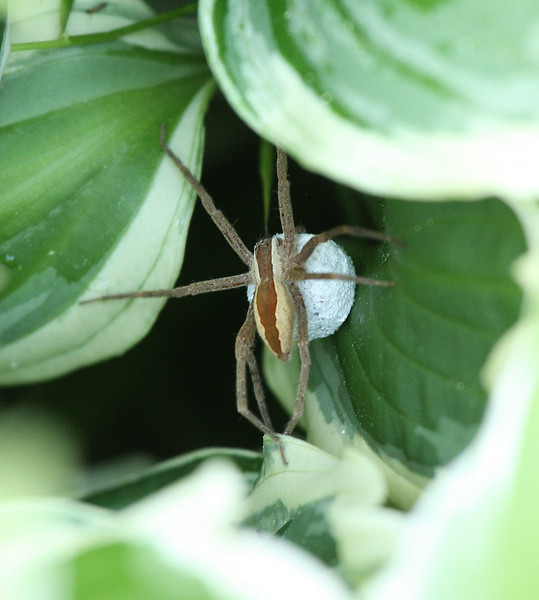 IMG4_38222 Spider trmzb