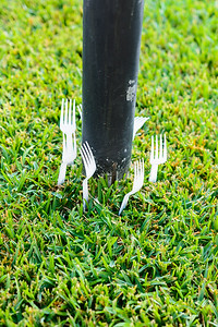 Forks in yard-1695