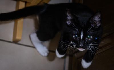 Kitten-0622