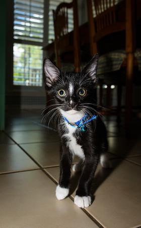 Kitten-0607
