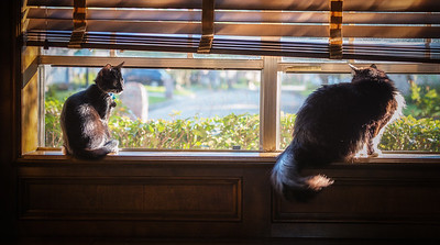 Two cat view-