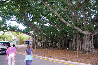 Edison & Ford Winter Estates, Fort Myers, FL