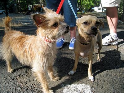 Lulu and Niki