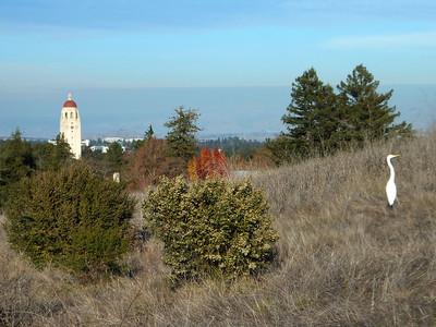Stanford Hike 12:28:2011 018