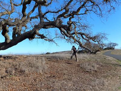 Stanford Hike 12:28:2011 012