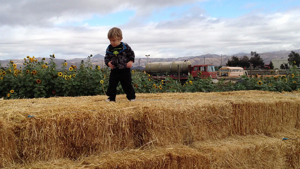 Swank Farm Hollister001