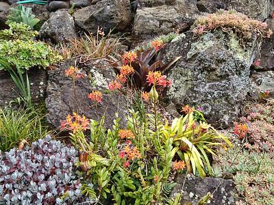 Hawaii Summer 2012- 020