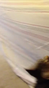 Lonny's Kitten Jules