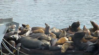 Moss Landing Seals007