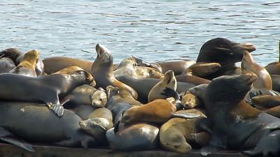 Moss Landing Seals005