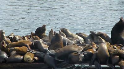 Moss Landing Seals006