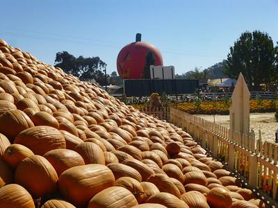 Pumpkin Patch 2013 18