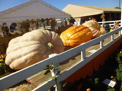 Pumpkin Patch 2013 13
