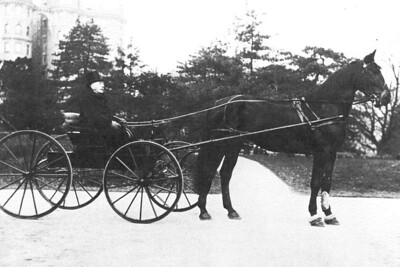 "James J. Finan, born 1843 in County Sligo, Ireland. Died 1907, New York City. Father of Vincent T. Finan. This picture was taken on West End Avenue in Manhattan, NYC. The horse's name:  ""Finan's Star"""